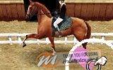 Horse Life - Recensione