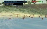 Wild Earth: African Safari - Recensione