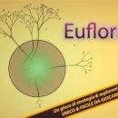 Eufloria - Disponibile da oggi su iPhone e supporto per iPad Retina