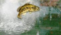 Rapala Pro Bass Fishing - Trailer