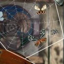 Spider: Rite of the Shrouded Moon ha finalmente una data d'uscita su PC e iOS