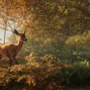 Avalanche Studios annuncia theHunter: Call of the Wild, nuovo gioco di caccia previsto su PC all'inizio del 2017