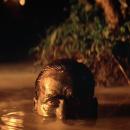 Francis Ford Coppola ha annunciato il videogioco del suo immortale capolavoro cinematografico Apocalypse Now