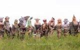 Sedici ragazze celebrano Shadow of the Colossus con alcuni provocanti cosplay - Notizia