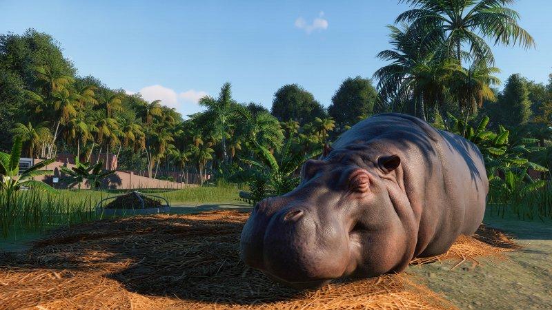 Planet Zoo Ippopotamo